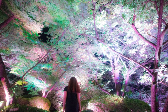 171026125530-teamlab-japan-cherry-blossoms